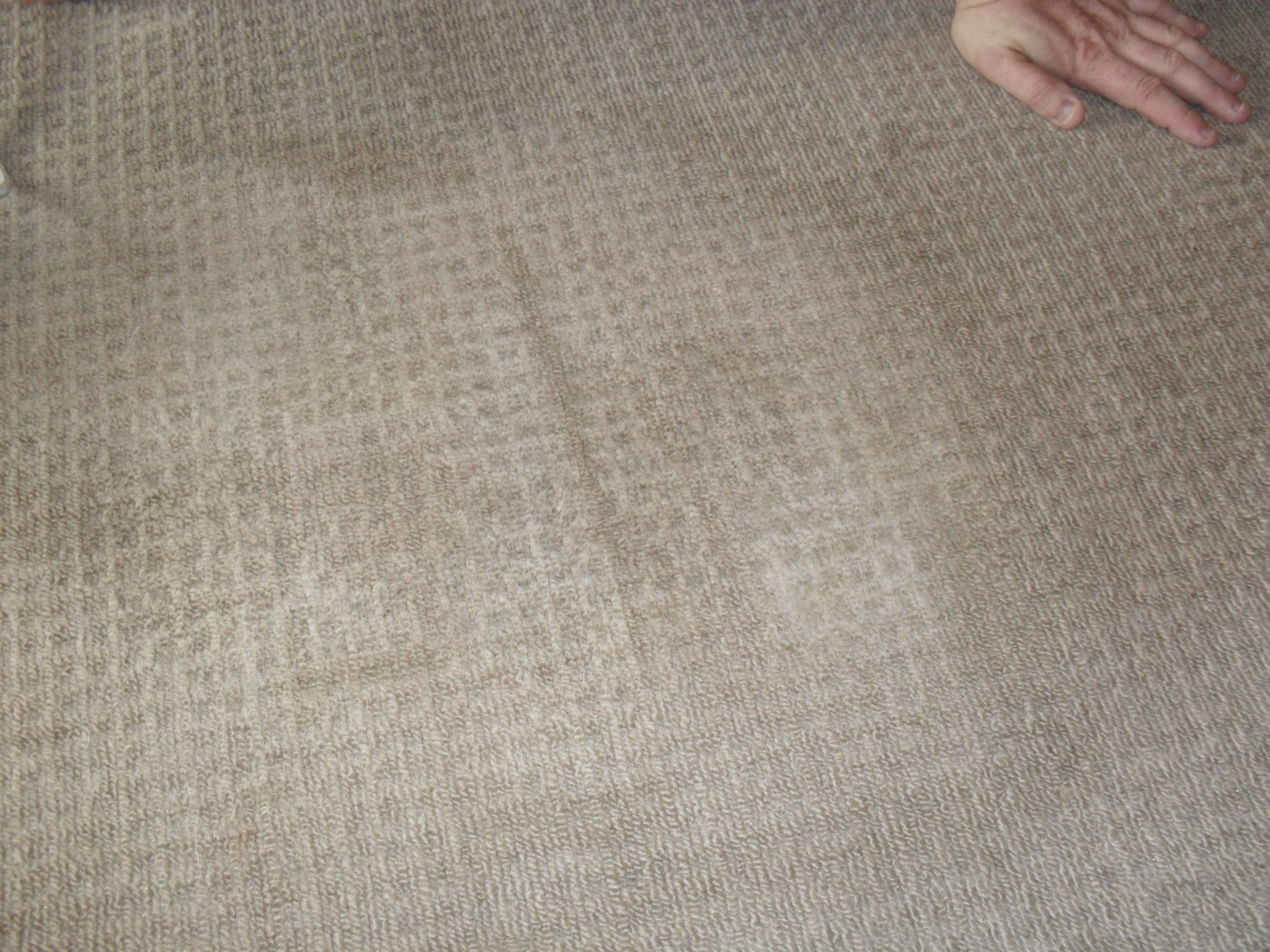 Carpet stains and spots we get them off carpet stain removal melbourne - Remove carpet stains ...