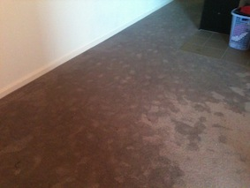 Water Damaged Carpets Canberra Emergency Wet Dry Flood
